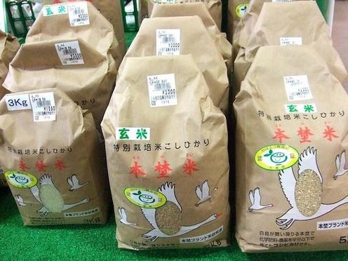 중국 부유층, 이번에는 일본산 무공해쌀 구매 열풍