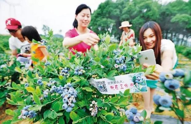 중국 농업계까지 인터넷 혁명 진행 중