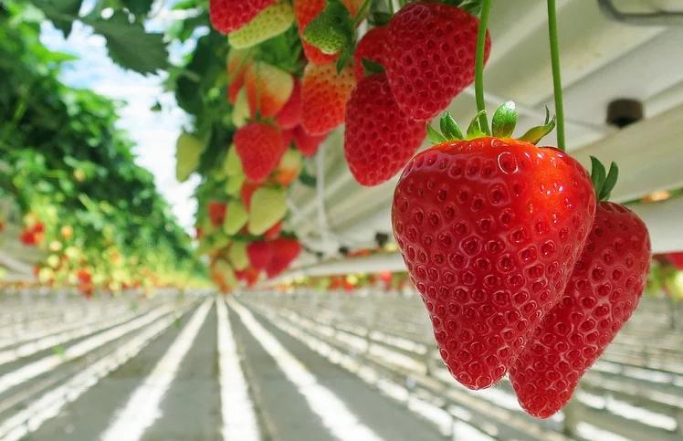 중국 농업 인공지능과 전자상거래 결합
